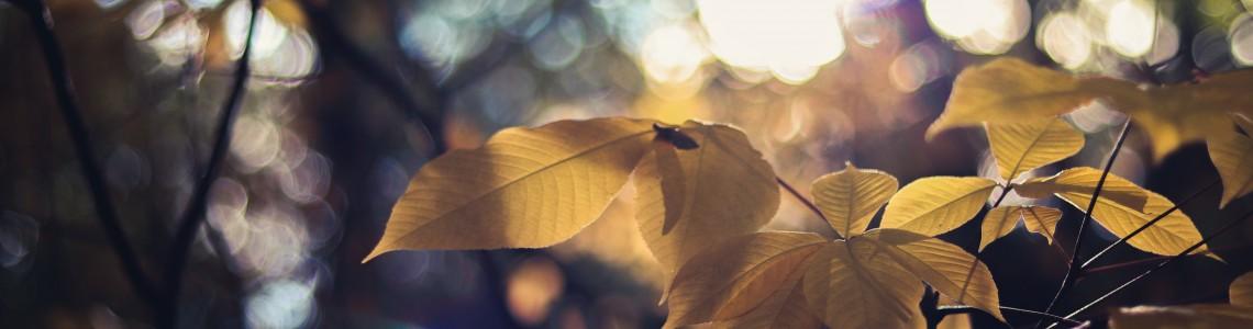 Concepts de base de l'éclairage horticole